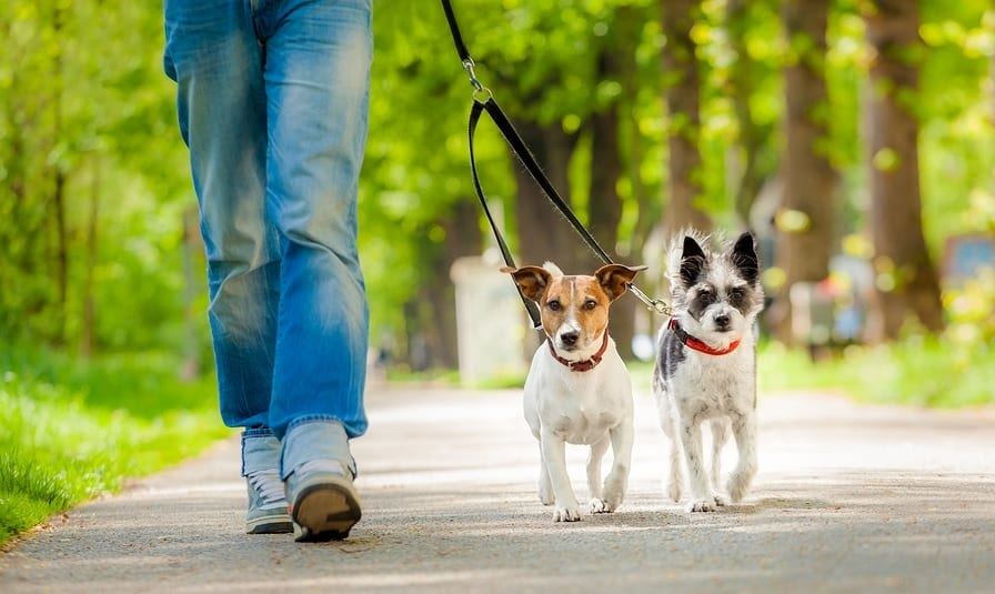 What to bring with you on your dog walking jobs
